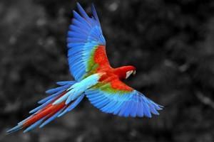 ptice-egzoticne.jpg