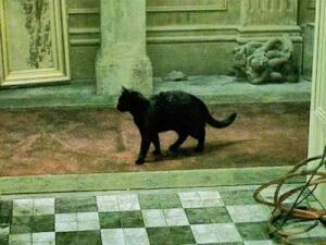 cat_deja_vu