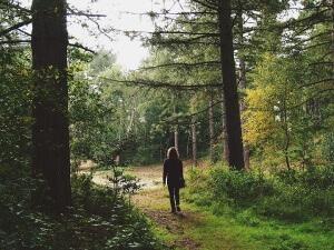 wood-walk