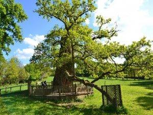drvo-pixabay