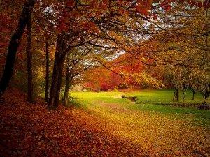 jesen_pix
