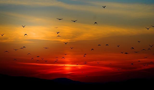 ptice-pix