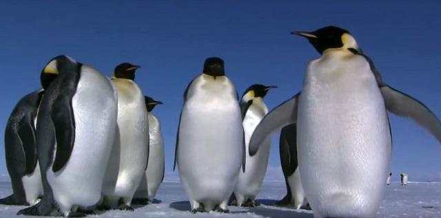 pingvini_youtubeprintscreen