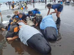 kitovi_spasavanje_youtube