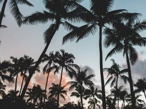 kokos_drvece_pix