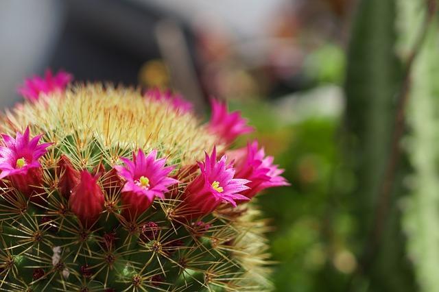 cactus-2161126_640