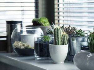 dom-biljke-kaktus-pixabay