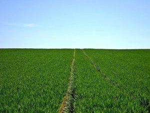 poljoprivreda_oranica_pix