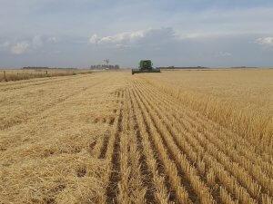 poljoprivreda_psenica_pix